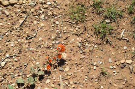 Flora in the Canyon