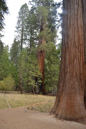 Each tree is multifaceted