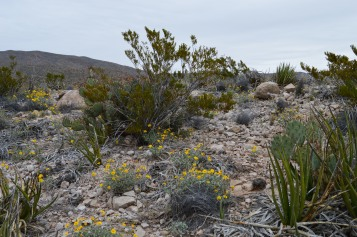 Our Big Bend Experience