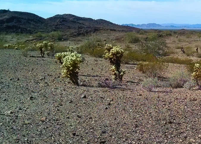 Desert around us